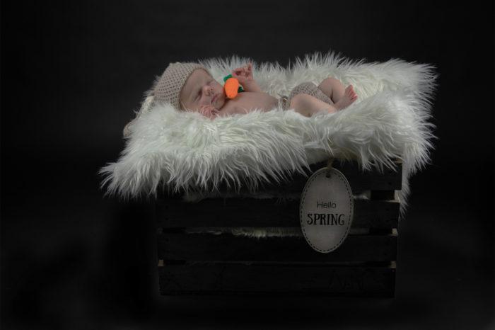 portfolio newborn jongetje slaapt lekker als konijn in een houten krat