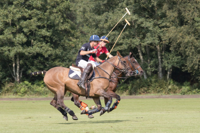 portfolio sport paardenpolo 2 paarden los van de grond